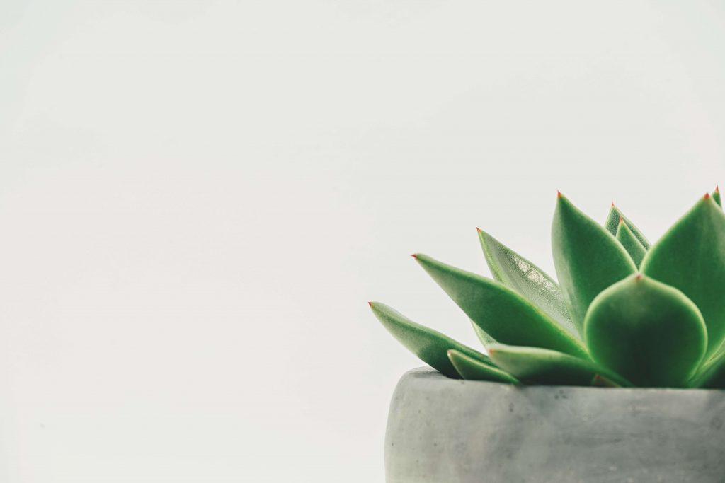 Minimalistyczny roślinny design