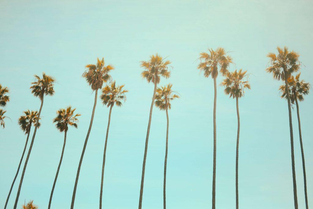 Palmy na tle błękitnego nieba
